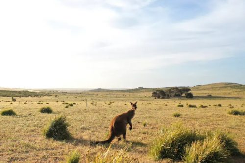 Post-fire Australia will provide travelers with more opportunities for 'restorative tourism